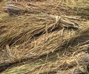 وزارة البيئة: جمع 4 آلاف طن قش أرز بالبحيرة والمنصورة للحد من التلوث