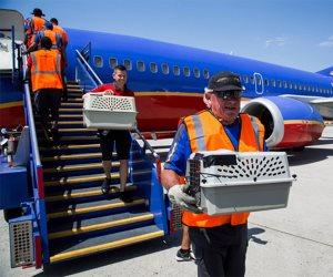 """شركة طيران تخصص رحلات لنقل الحيوانات اليتيمة هربا من فيضان """"هارفى"""" بـ""""تكساس"""""""