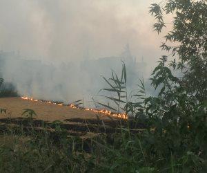 بحزمة إجراءات استباقية.. هكذا تواجه وزارة الزراعة ظاهرة حرق قش الأرز