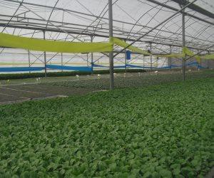 التنمية الزراعية: توجيه الرئيس بإنشاء 100 صوبة زراعية يوفر 500 ألف فرصة عمل للشباب