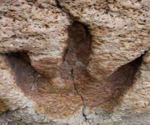 تعود لـ85 مليون سنة.. اكتشاف حفريات ديناصور من أكلة اللحوم بالأرجنتين