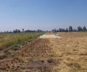 استيراد كميات كبيرة من الأرز.. هل يكفى المحصول الجديد احتياجات المواطنين؟