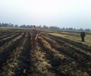 زراعة الشرقية تشن حملة لإزالة مشاتل الأرز في منيا القمح