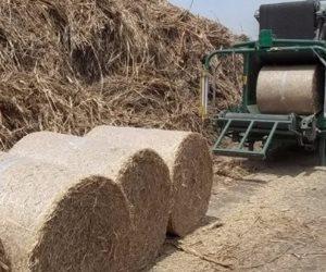 وزارة البيئة: تجميع 576 طن قش أرز بمحافظة الغربية ومنع حرقه منعا للتلوث