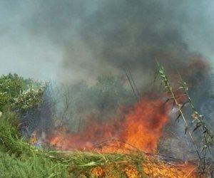 الحماية المدنية بالشرقية تسيطر على حريق نصف فدان قش أرز بمدينة الحسينية
