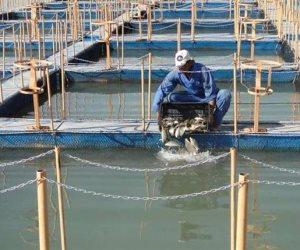 بخبرة صينية مصرية.. كيف تحولت «غليون» لأكبر مزرعة للثروة السمكية بالشرق الأوسط؟