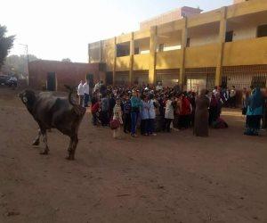 التفاصيل الكاملة حول حضور جاموسة لتحية العلم بأحد مدارس المنوفية