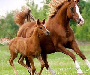 الحصان الصغير يساعد فى علاج مرض التوحد عند الأطفال