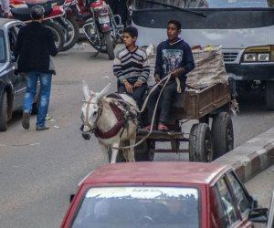 """من الكارو إلى الأتوبيس """"أبو دورين"""".. كيف تغيرت وسائل النقل بالقاهرة في عام واحد؟"""