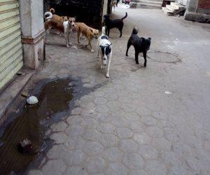سر انتظار مجموعة من الكلاب لمريض أمام مستشفى في البرازيل