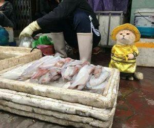 """""""دوج"""" قطة تتمكن من كسب الأموال فى أسواق فيتنام ببيع الأسماك للزبائن"""