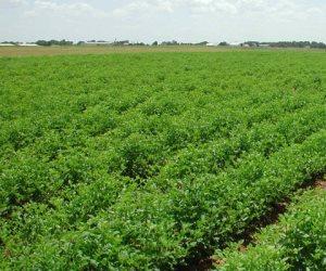 تفاصيل الخطة الوطنية لرصد متبقيات المبيدات