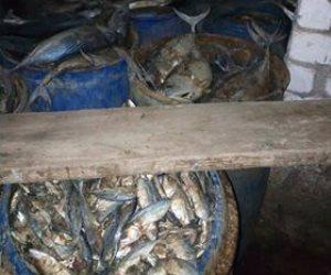 قبل شم النسيم.. ضبط 5 أطنان رنجة وفسيخ فاسد داخل مصنع في أكتوبر (صور)