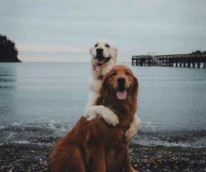 عاش يا وحش.. 106 كلب بمنزل سيدة تحب رفقة الكلاب