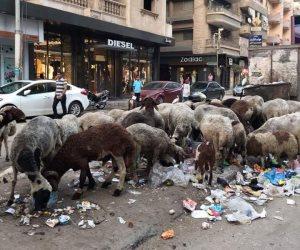 سكان شارع طلبة عويضة بالزقازيق يطالبون برفع القمامة المتراكمة