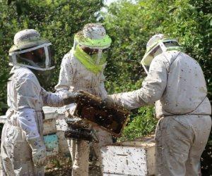 نحالون فلسطينيون يجمعون العسل على حدود غزة