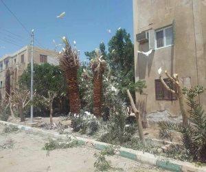 «أبو قردان» يجتاح شوارع الداخلة.. وحملة مكبرة لمكافحته (صور)