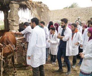 علاج 2900 حالة من الماشية والدواجن بالمجان في أطفيح