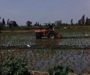 إزالة 5 أفدنة من زراعات الأرز المخالفة في الدقهلية (صور)