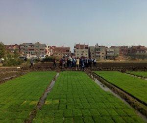 وزير الري يزور مشروع جديد لإنتاج شتلات الأرز لتوفير 25% من مياه الري بالدقهلية