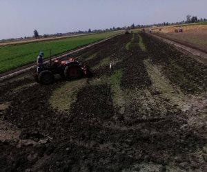 إزالة 50 فدان أرز لزراعتها بدون تصريح  ( صور )