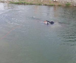 انتشال جثة تاجر «خضروات» غرق بإحدى ترع المنوفية