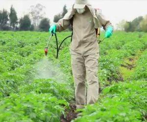 دور مهم للمبيدات الحشرية في الإصابة بالشلل الرعاش .. تعطل الطاقة بالخلايا
