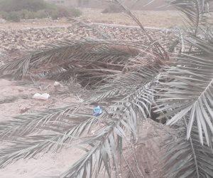 تلف أسلاك الكهرباء في مدينة طهطا بسبب سقوط شجرة (صور)