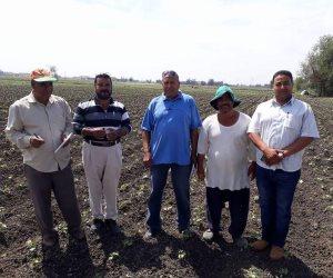 انطلاق فعاليات الحملة القومية للقطن بالبحيرة للتوسع فى زراعته وإنتاجه (صور)