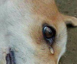 الكلاب أمم أمثالكم.. الرأي الديني وموقف الرسول من قتل حيوانات الشوارع (فيديو وصور)