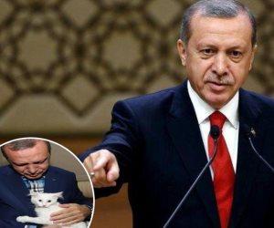 قصة «قطة أردوغان» المتهمة بتزوير انتخابات 2014.. ماذا يفعل الديكتاتور في 2018؟