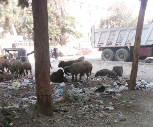 أين نواب العمرانية من مشكلات الدائرة؟.. القمامة والأغنام تحول حياة المنطقة إلى جحيم