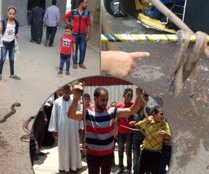 الرفاعي.. الملجأ الأخير لأهالي منية السعيد بالبحيرة لمواجهة الأفاعي (صور)