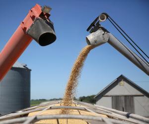 وصول أطنان من القمح الروسي إلى مصر بقيمة 29 مليون دولار
