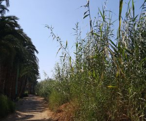 أهالي القرية يكشفون السبب.. لماذا تحاصر الزواحف والثعابين منازل «القنطرة» بأسيوط؟ (صور)