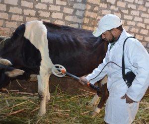 """لتحصين الماشية ضد """"الحمى القلاعية والوادي المتصدع"""".. تفاصيل مد حملة """"من بيت لبيت"""""""