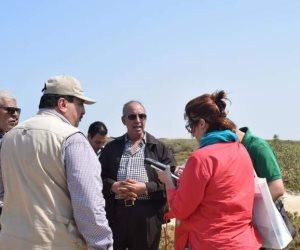 كل ما تريد معرفته عن زراعة نبات «السلاكورنيا» في البحر الأحمر (صور)