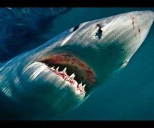 قلب الحوت الأزرق يسع أشخاص وحلقُه بحجم كرة شاطىء.. 13 معلومة قد لا تعرفها من قبل