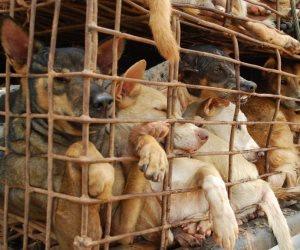 برلمانيون يطالبون بإخصاء «الكلاب» لمواجهة الأزمة: تعامل بإنسانية