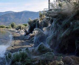 كوابيس التغير المناخي.. العناكب تستولي على قرية يونانية وتنسج شباك بطول 300 متر
