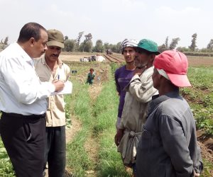 لإنتاج ثمار بدون مبيدات.. كيف تواجه وزارة الزراعة «العنكبوت الأحمر»؟ (صور)