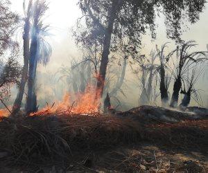 بعد حريق قرية الراشدة.. ما هى خطة الحكومة لإحياء ثروات الوادى الجديد؟