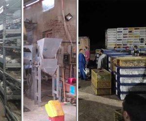 مزارع الدواجن «الموت المكتوم».. شبح يهدد حياة 10 ملايين شخص حول العالم