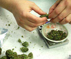 """""""دلع الكيف"""".. هذه الدول تقنن زراعة وتجارة المخدرات"""