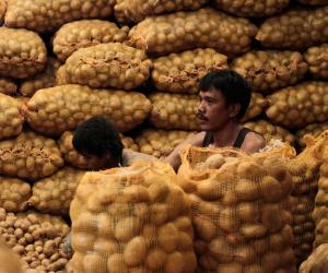 بيانات رسمية توضح أسباب انخفاض صادرات مصر من البطاطس والبصل