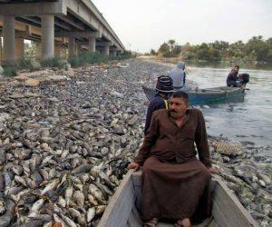 نفوق الأسماك في العراق.. بين جشع الإيران وضعف الحلول الحكومية