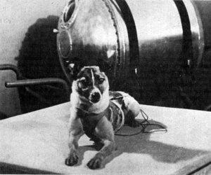 في ذكرى رحيل «لايكا».. القصة الكاملة لأول كلبة تصعد للفضاء الخارجي