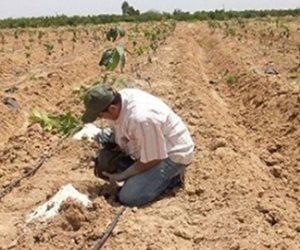 مليار و545 مليون جنيه.. تعرف على خطة الاستثمار بقطاع الزراعة في العام المالي الجديد