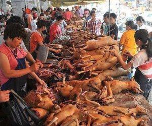 لماذا يأكل الآسيويين لحوم الكلاب؟.. هذه أساطيرهم حول فوائد لحومها