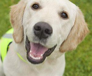 بيزنس «الكلاب».. من العلاج في مستشفيات خاصة إلى الإقامة بالفنادق